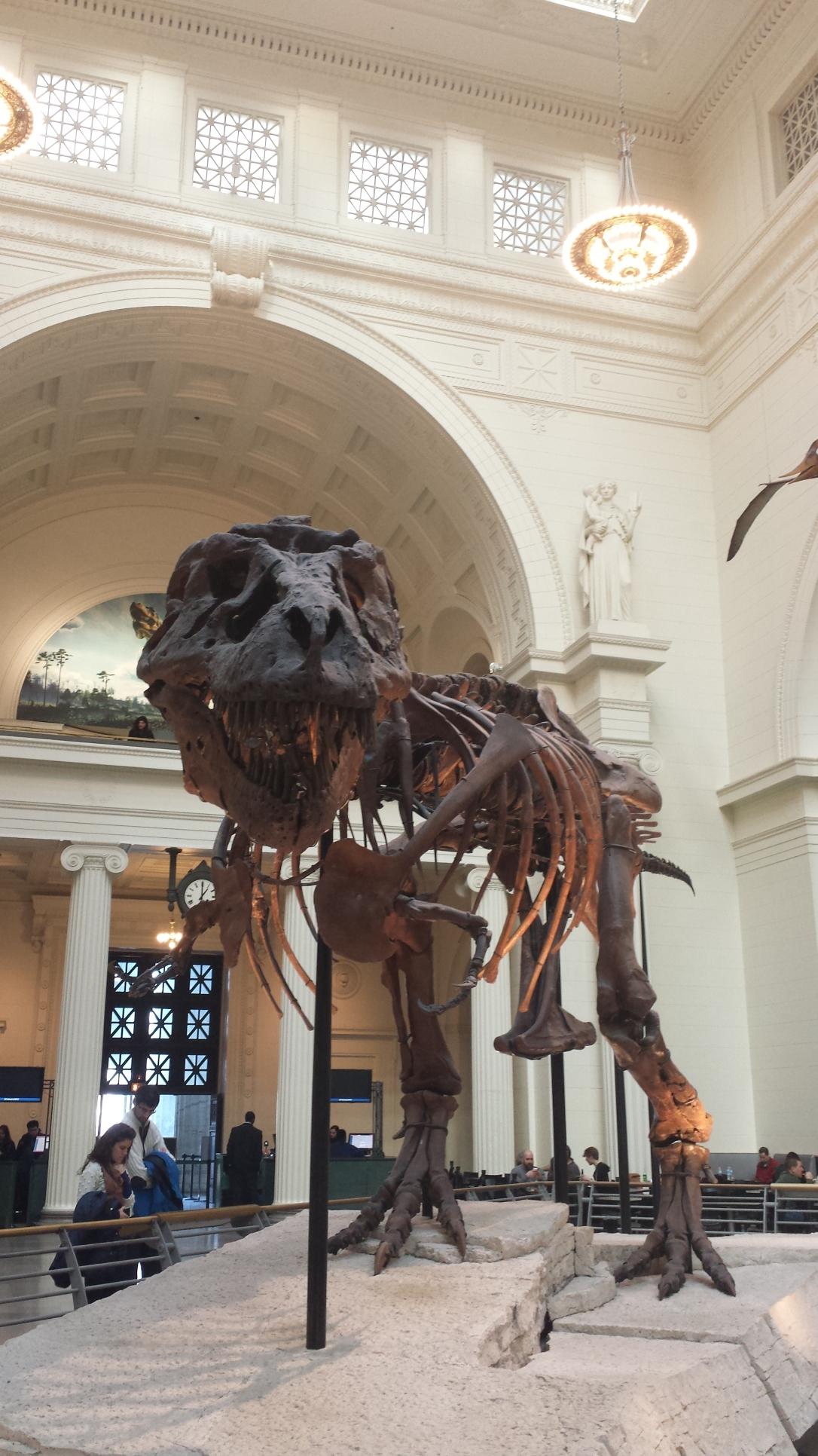 Chicago Field Museum, Sue