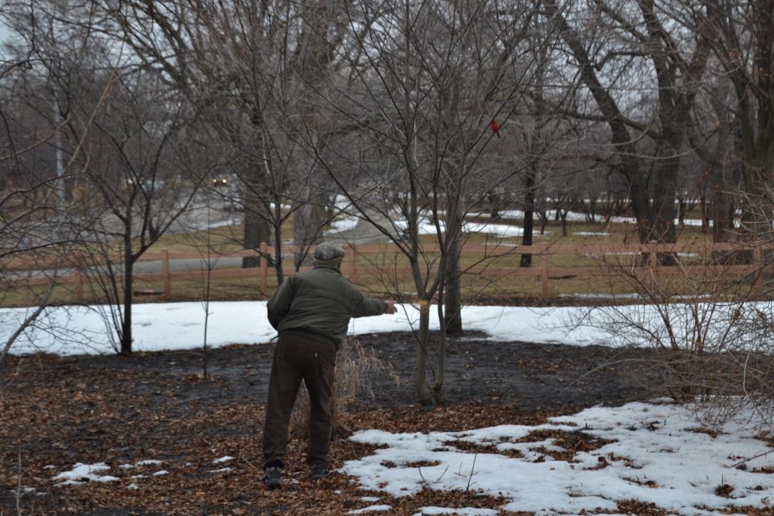 man feeding birds, winter in chicago
