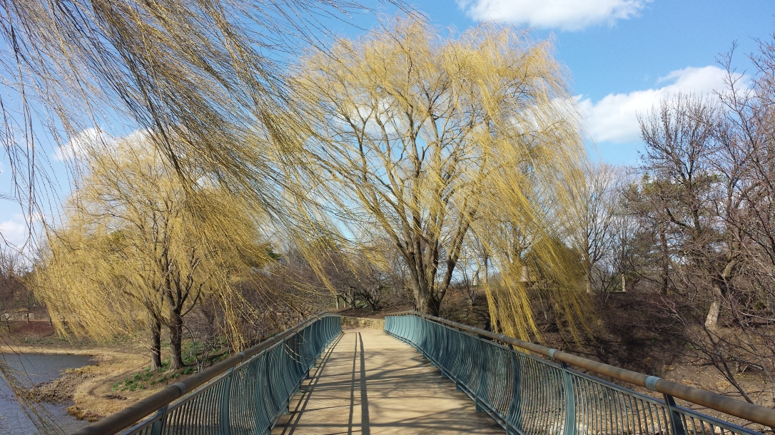 BotanicGarden willows