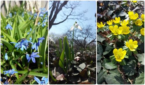 BotanicGardenBlooms1