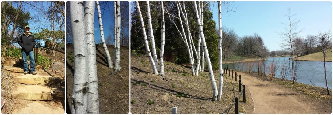 BotanicGardenTrees